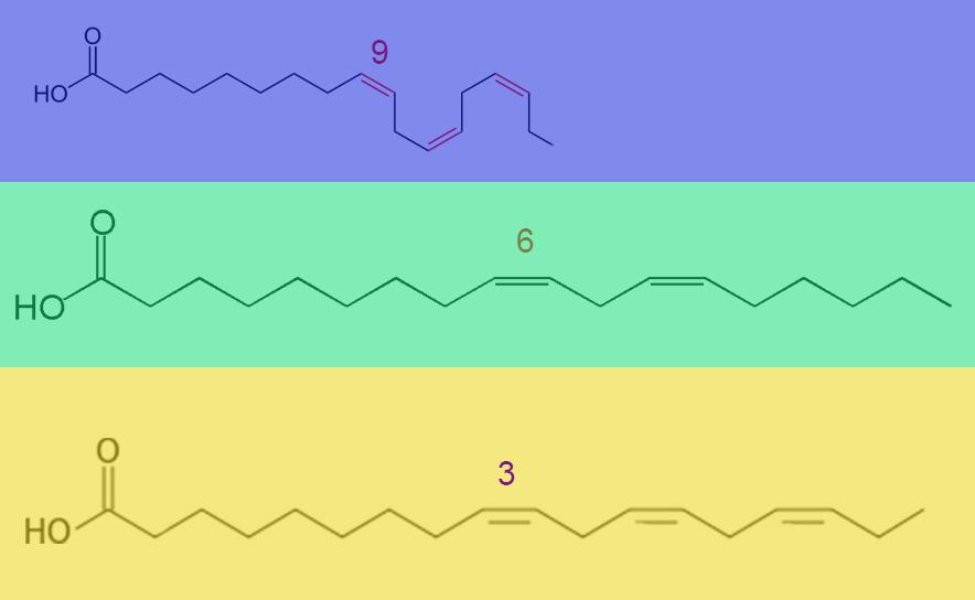Omega-3, Omega-6 und Omega-9-Fettsäuren